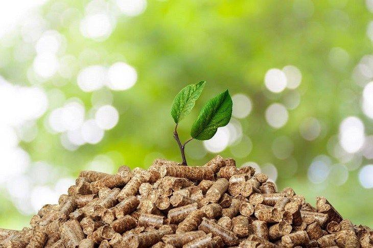 Energía de biomasa: Para comenzar solo hay que dar el primer paso