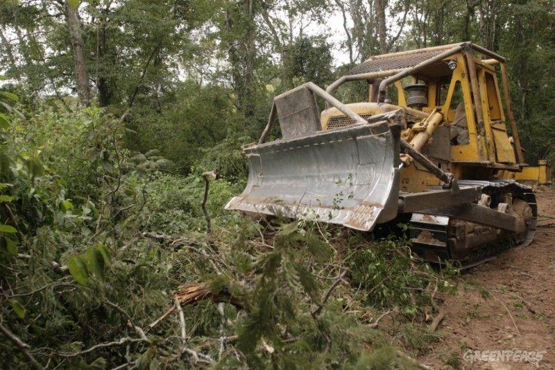 Deforestación: Chaco, Salta, Formosa y Santiago del Estero encabezan el ranking