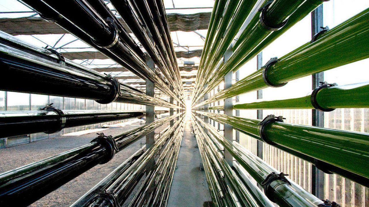 Biocombustibles: energías renovables para mejorar nuestra calidad de vida y contribuir a la sostenibilidad ambiental